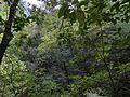 Selva virgen Los Tilos.jpg