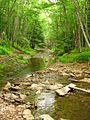 Seneca-Creek-Trail-Scene ForestWander.JPG