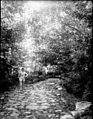 Sentier dans les bois, près de Saurat, Ariège (6216922838).jpg