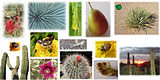 Set of animals and plants NobbiP.jpg