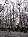 Seversk, Tomsk Oblast, Russia - panoramio (108).jpg
