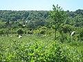 Sheep in Orchard, near Sepham Farm - geograph.org.uk - 1331587.jpg