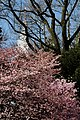 Shinjuku Garden (5652439824).jpg