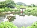 Shinkawa(Ninomiya Irrigation) in Utsunomiya 01.jpg