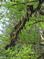 Silver Falls State Park 06.jpg