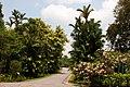 Singapore Botanic Gardens (4042378507).jpg