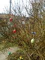 Skořápkovník - příprava na Velikonoce - Vysočina.jpg