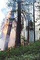 Slide wildfire used for resource benefit, Sequoia and Kings Canyon National Parks, 2002 (c092fdda-4535-4664-89f6-5c227cb3e72c).jpg