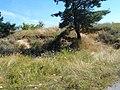 Smilyans'kyi district, Cherkas'ka oblast, Ukraine - panoramio (98).jpg