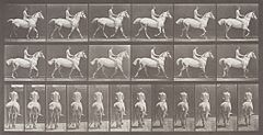 Smith Trotting Bareback LACMA M.2008.40.1504.jpg