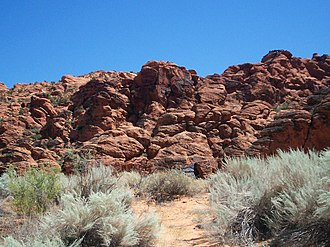 Snow Canyon State Park - Various types of desert shrubs are found in the park against the rock formations