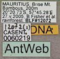 Solenopsis mameti casent0060219 label 1.jpg