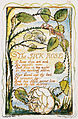 Songs of Innocence and of Experience, copy Y, 1825 (Metropolitan Museum of Art) object 38 The Sick Rose.jpg