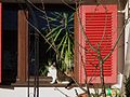 Sonnenhungrige Katze.JPG