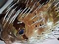 Spiny fish.jpg