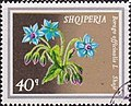 Stamp of Albania - 1974 - Colnect 354133 - Borage Borago officinalis.jpeg