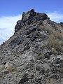 Starr-050404-0063-Chloris barbata-habitat-Hulu-Maui (24113345124).jpg