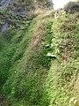 Starr-050815-3378-Erigeron karvinskianus-habit-Pohakuokala Gulch-Maui (24173043944).jpg
