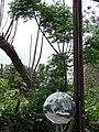 Starr-090520-8205-Melia azedarach-habit with Forest and Tahoe reflection in mirror-Keokea-Maui (24329158143).jpg
