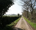 Straight Track to Thorneypits - geograph.org.uk - 391735.jpg