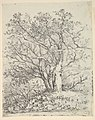 Study for Three Trees MET DP822051.jpg
