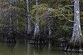 Stumpy Lake stumps 2 LR.jpg