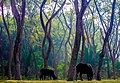Sundarbans South Wildlife Sanctuary, Khulna100.jpg
