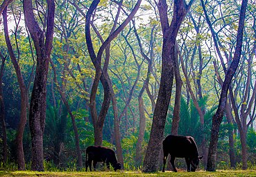Sundarbans South Wildlife Sanctuary, Khulna100.jpg