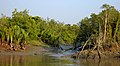 Sundarbans in the afternoon 1.jpg