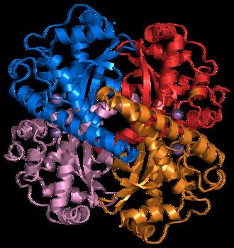 Superoxide dismutase - Image: Superoxide dismutase 2 PDB 1VAR