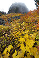 Table Rocks Wilderness (9500473497).jpg