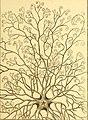 Tableau encyclopédique et méthodique des trois règnes de la nature (1791) (14581476570).jpg