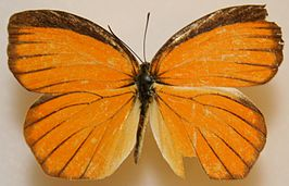 Tailed Orange Megan McCarty14.jpg