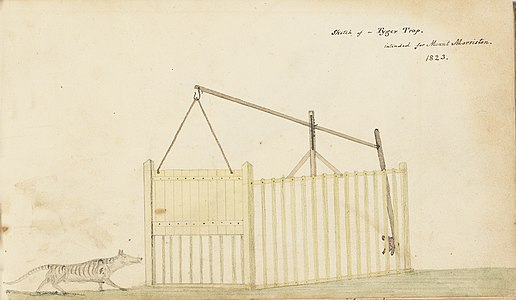 Tasmanian Tiger Trap 1823 Thomas Scott.jpg