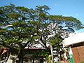 Taysan,Batangasjf9918 04.JPG