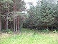 Tentsmuir Forest, The dark side - geograph.org.uk - 1452420.jpg