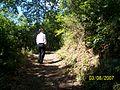 Termal ormanı - panoramio.jpg