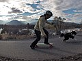 The Border Collie and The Skateboard 2.jpg