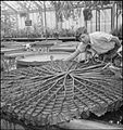 The Gardens of Kew- the work of Kew Gardens in Wartime, Surrey, England, UK, 1943 D16496.jpg