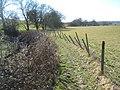 The High Weald Landscape Trail beside Bates Gill - geograph.org.uk - 1744094.jpg