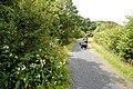 The Mawddach Trail, near Bryn-y-gwin - geograph.org.uk - 1428507.jpg