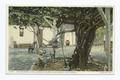 The Old Grape Vine, San Gabriel, Calif (NYPL b12647398-74305).tiff