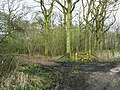 The entrance to Plain Copse - geograph.org.uk - 1221914.jpg