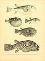 The fishes of India (7070552041).jpg