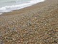 The pebble beach at Hythe - geograph.org.uk - 611528.jpg