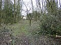 Through the scrubby bit - geograph.org.uk - 349366.jpg