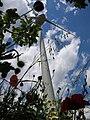 Tocco da Casauria Wind Farm Published on New York Times.JPG