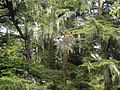 Tongass National Forest 024.jpg