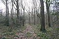Track through Hall Wood - geograph.org.uk - 360257.jpg