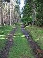 Track through woodland - geograph.org.uk - 490363.jpg